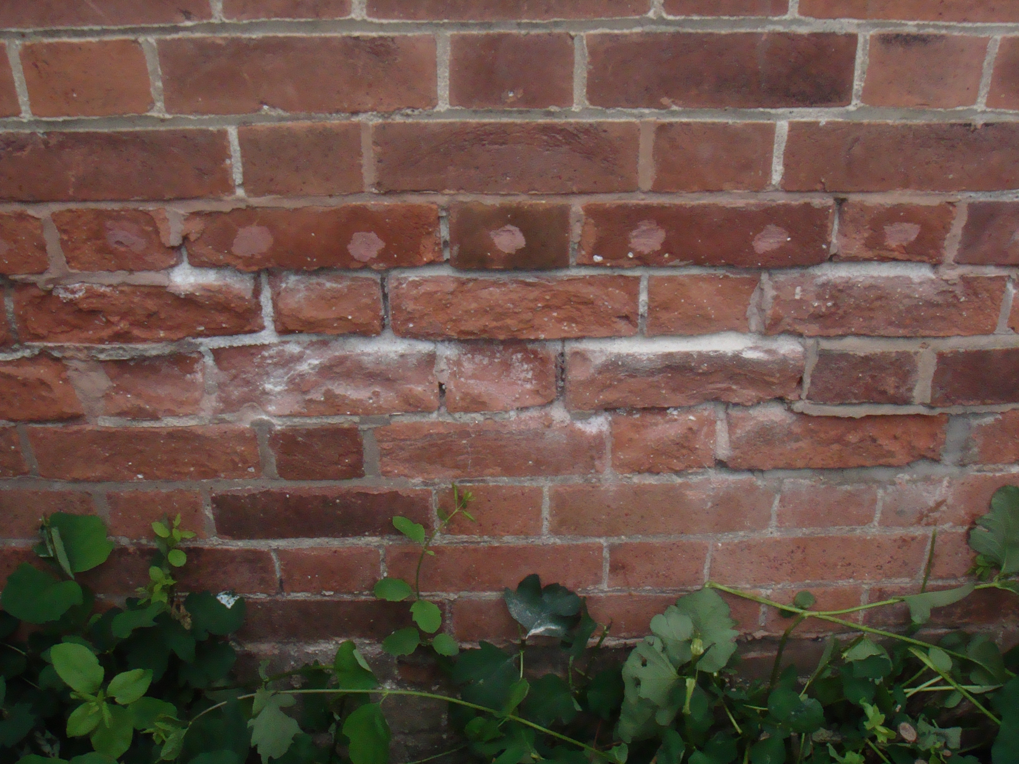 Natural Lime Pointing Care Craft Building Services Leeds